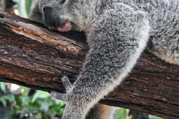 sleep habit